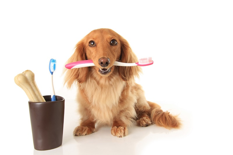 Pet Dental Care in Roswell, GA