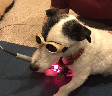 laser-puppy-guided